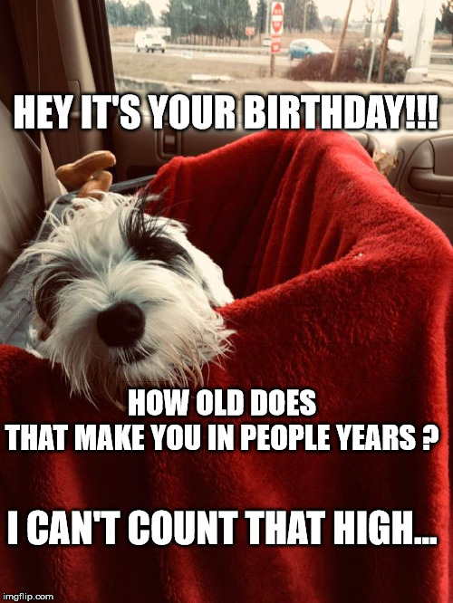 George | HEY IT'S YOUR BIRTHDAY!!! HOW OLD DOES THAT MAKE YOU IN PEOPLE YEARS ? I CAN'T COUNT THAT HIGH... | image tagged in george | made w/ Imgflip meme maker