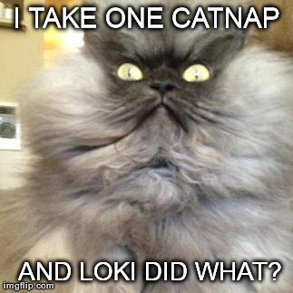 Colonel Meow goes to Asgard. | I TAKE ONE CATNAP   AND LOKI DID WHAT? | image tagged in colonel meow,asgard,animals,avengers,loki,cats | made w/ Imgflip meme maker