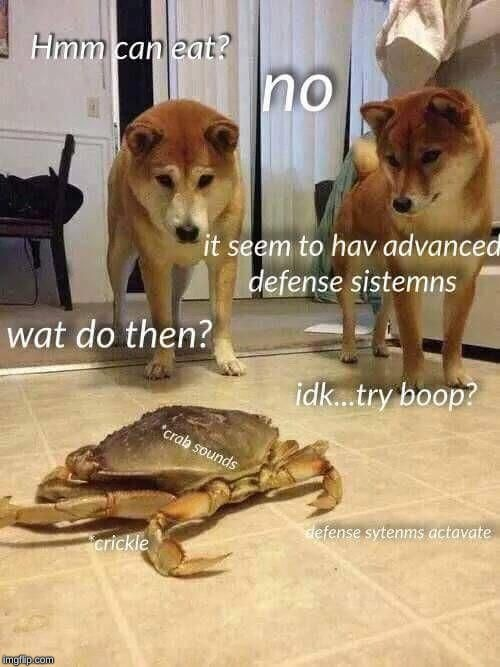 image tagged in crab,dog,attack,defense | made w/ Imgflip meme maker