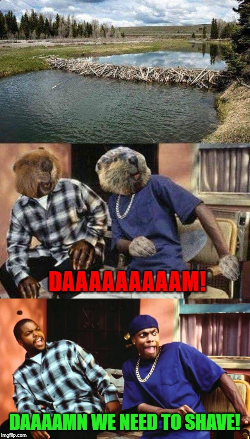 I hate seeing myself in pictures... |  DAAAAAAAAAM! DAAAAMN WE NEED TO SHAVE! | image tagged in ice cube damn,memes,beaver dam,funny,beavers,chris tucker damn | made w/ Imgflip meme maker