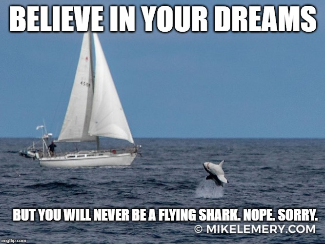 Flying Shark Cape Cod | BELIEVE IN YOUR DREAMS BUT YOU WILL NEVER BE A FLYING SHARK. NOPE. SORRY. | image tagged in sharks,flyingshark,sailing,ocean,shark week | made w/ Imgflip meme maker