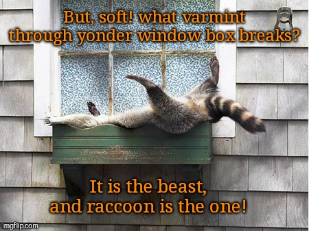 Romeo Ring-tail | But, soft! what varmint through yonder window box breaks? It is the beast, and raccoon is the one! | image tagged in funny raccoon,cute animals,shakespeare,romeo and juliet | made w/ Imgflip meme maker