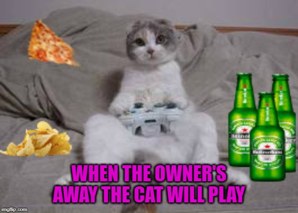 Better not beat my high score... | WHEN THE OWNER'S AWAY THE CAT WILL PLAY | image tagged in cat xbox,memes,cats will play,funny,cats,xbox | made w/ Imgflip meme maker