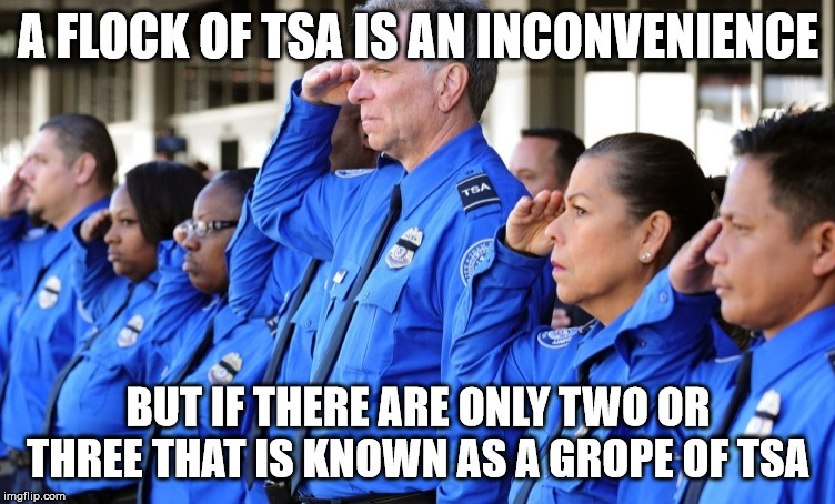 tsa group | A FLOCK OF TSA IS AN INCONVENIENCE BUT IF THERE ARE ONLY TWO OR THREE THAT IS KNOWN AS A GROPE OF TSA | image tagged in tsa,group,inconvenience,grope | made w/ Imgflip meme maker