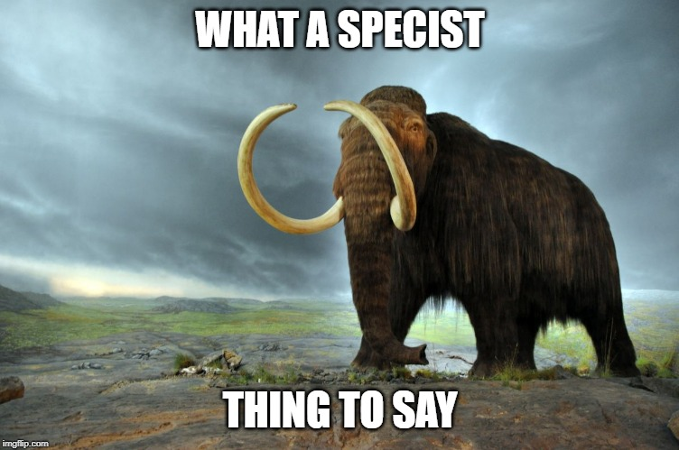 wooly mammoth | WHAT A SPECIST THING TO SAY | image tagged in wooly mammoth | made w/ Imgflip meme maker