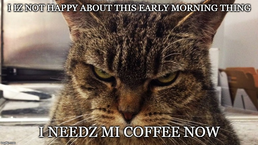 I Iz Not Happy | I IZ NOT HAPPY ABOUT THIS EARLY MORNING THING I NEEDZ MI COFFEE NOW | image tagged in morning,coffee,cats,mad | made w/ Imgflip meme maker