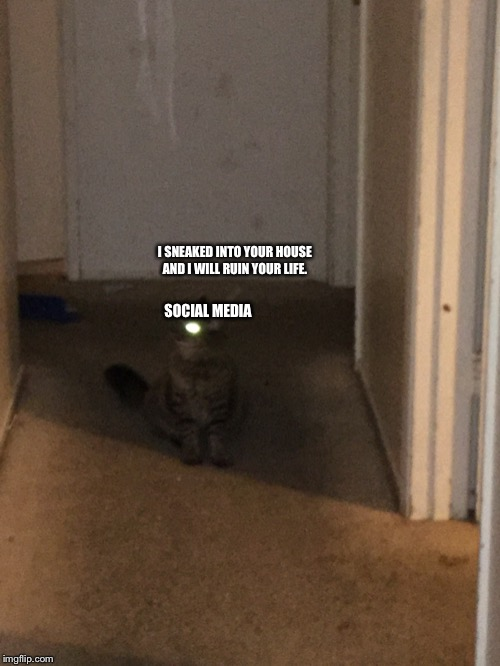 Cats be demons | SOCIAL MEDIA I SNEAKED INTO YOUR HOUSE AND I WILL RUIN YOUR LIFE. | image tagged in cats be demons | made w/ Imgflip meme maker