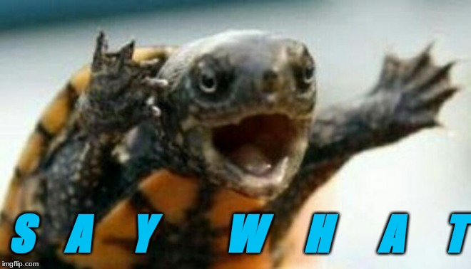 Turtle Say What? | S    A     Y         W     H      A     T | image tagged in turtle say what | made w/ Imgflip meme maker
