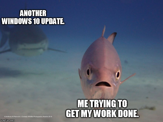 ANOTHER WINDOWS 10 UPDATE. ME TRYING TO GET MY WORK DONE. | image tagged in computers,windows 10 | made w/ Imgflip meme maker