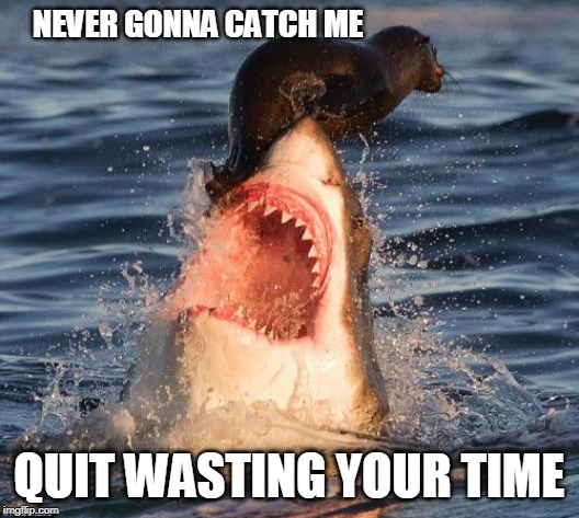 Travelonshark Meme | NEVER GONNA CATCH ME QUIT WASTING YOUR TIME | image tagged in memes,travelonshark | made w/ Imgflip meme maker