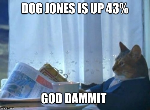 I Should Buy A Boat Cat | DOG JONES IS UP 43% GOD DAMMIT | image tagged in memes,i should buy a boat cat | made w/ Imgflip meme maker