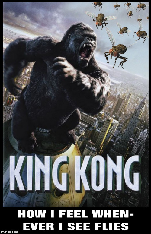 image tagged in king kong,movies,flies,fly,warm weather,giant | made w/ Imgflip meme maker