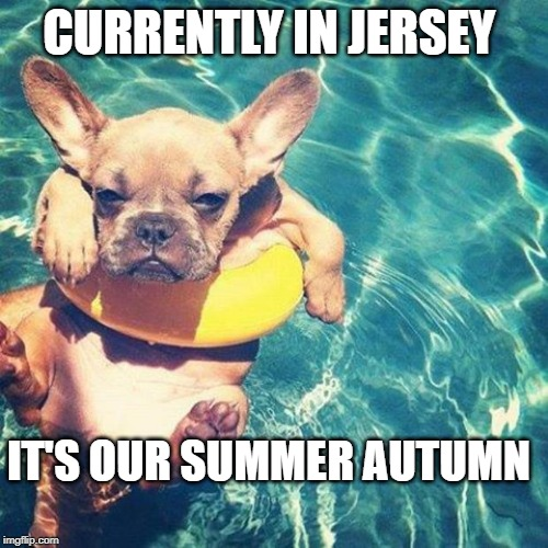 Jersey Summer | CURRENTLY IN JERSEY IT'S OUR SUMMER AUTUMN | image tagged in summer is here dog pug,nj,new jersey memory page,lisa payne,u r home realtyy | made w/ Imgflip meme maker