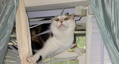 Cat In Blinds Blank Template Imgflip