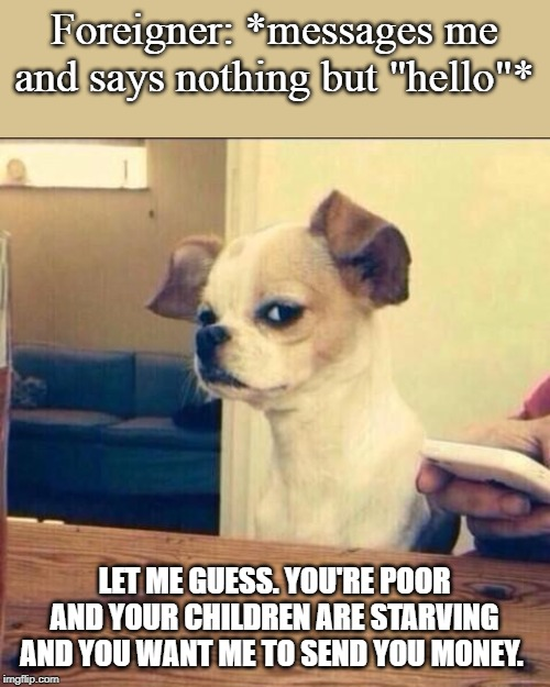"Skeptical Chihuahua | Foreigner: *messages me and says nothing but ""hello""* LET ME GUESS. YOU'RE POOR AND YOUR CHILDREN ARE STARVING AND YOU WANT ME TO SEND YOU M 