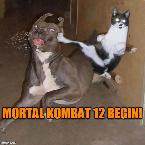 Mortal Kombat 12! |  MORTAL KOMBAT 12 BEGIN! | image tagged in funny,wtf,cats,dogs,karate,mortal kombat | made w/ Imgflip meme maker