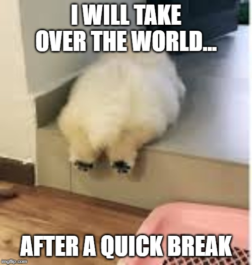 Puppy Domination | I WILL TAKE OVER THE WORLD... AFTER A QUICK BREAK | image tagged in puppy | made w/ Imgflip meme maker