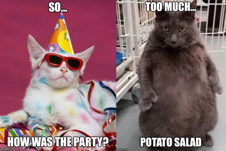 Party cats | image tagged in party animal | made w/ Imgflip meme maker