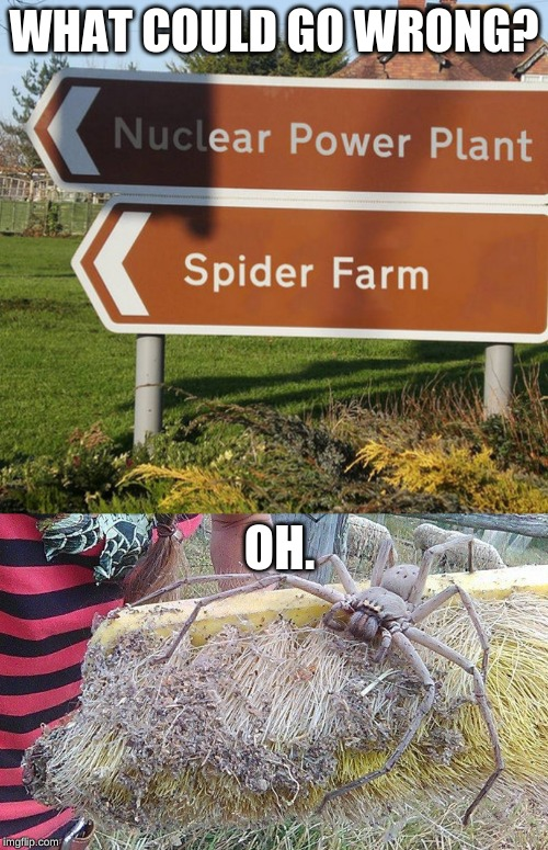 well, oops |  WHAT COULD GO WRONG? OH. | image tagged in what could go wrong,meanwhile in australia,memes,spiders,nuclear power | made w/ Imgflip meme maker