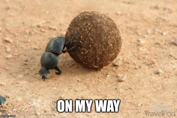 Hard Working Dung Beetle | ON MY WAY | image tagged in hard working dung beetle | made w/ Imgflip meme maker