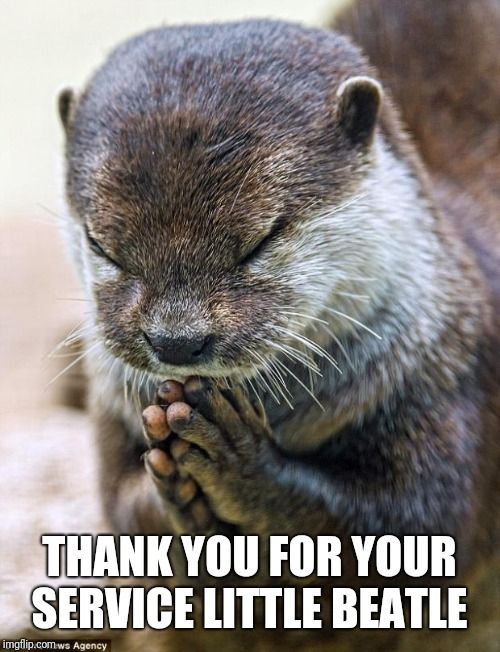Thank you Lord Otter | THANK YOU FOR YOUR SERVICE LITTLE BEATLE | image tagged in thank you lord otter | made w/ Imgflip meme maker