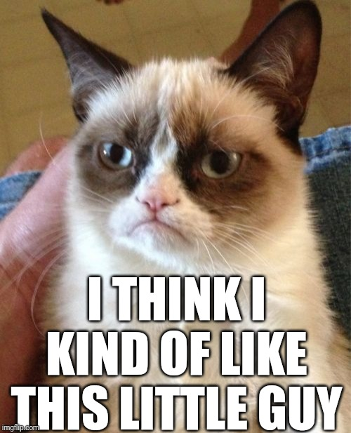 Grumpy Cat Meme | I THINK I KIND OF LIKE THIS LITTLE GUY | image tagged in memes,grumpy cat | made w/ Imgflip meme maker