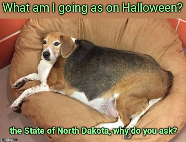 Big broad dog | What am I going as on Halloween? the State of North Dakota, why do you ask? | image tagged in big broad dog,funny animals | made w/ Imgflip meme maker