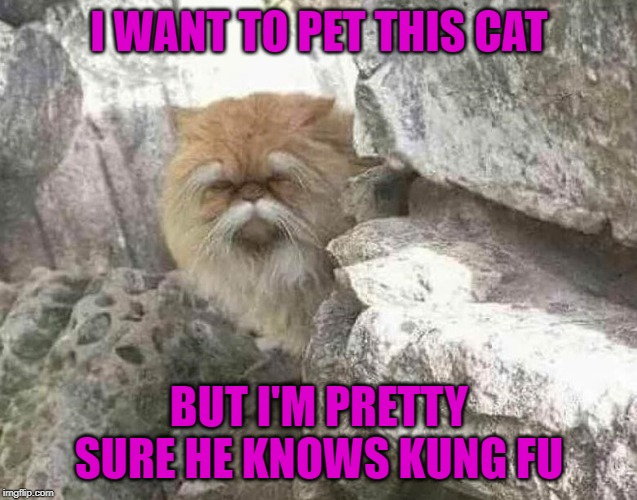 I WANT TO PET THIS CAT BUT I'M PRETTY SURE HE KNOWS KUNG FU | image tagged in kung fu cat,memes,cats,funny,kung fu,animals | made w/ Imgflip meme maker