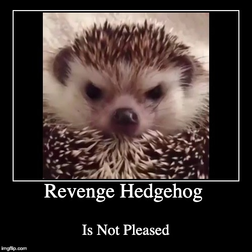 Revenge Hedgehog | Is Not Pleased | image tagged in hedgehog,funny | made w/ Imgflip demotivational maker