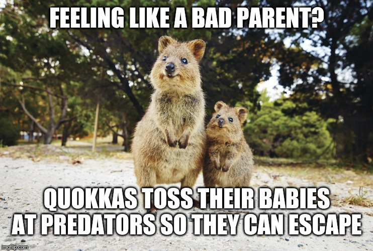 Now that is bad parenting! | FEELING LIKE A BAD PARENT? QUOKKAS TOSS THEIR BABIES AT PREDATORS SO THEY CAN ESCAPE | image tagged in funny memes,bad parenting,animals | made w/ Imgflip meme maker