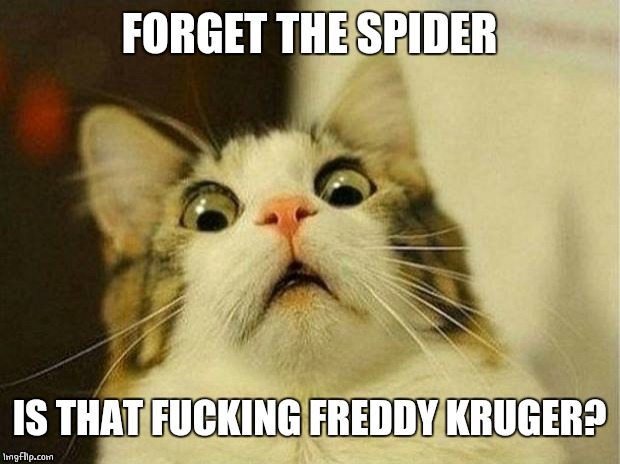 Scared Cat Meme | FORGET THE SPIDER IS THAT F**KING FREDDY KRUGER? | image tagged in memes,scared cat | made w/ Imgflip meme maker