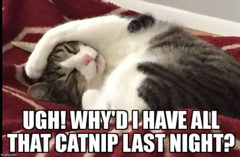 Hangover | image tagged in hangover,sleep,cat,catnip | made w/ Imgflip meme maker