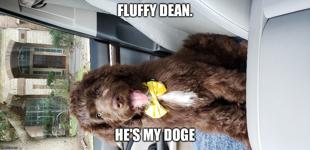 FLUFFY DEAN. HE'S MY DOGE | made w/ Imgflip meme maker