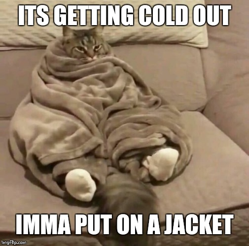 FUR IS NOT ENOUGH |  ITS GETTING COLD OUT; IMMA PUT ON A JACKET | image tagged in cats,cute cat | made w/ Imgflip meme maker