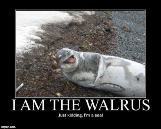 No, Seal... the Walrus was Paul. | image tagged in vince vance,i am the walrus,the beatles,laughing seal,seals,on the beach | made w/ Imgflip meme maker