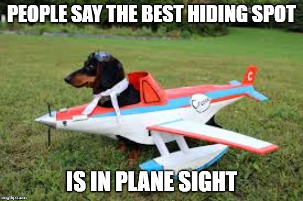 IDK i thought of it when i was bored | PEOPLE SAY THE BEST HIDING SPOT IS IN PLANE SIGHT | image tagged in dogs,sayings,puns | made w/ Imgflip meme maker