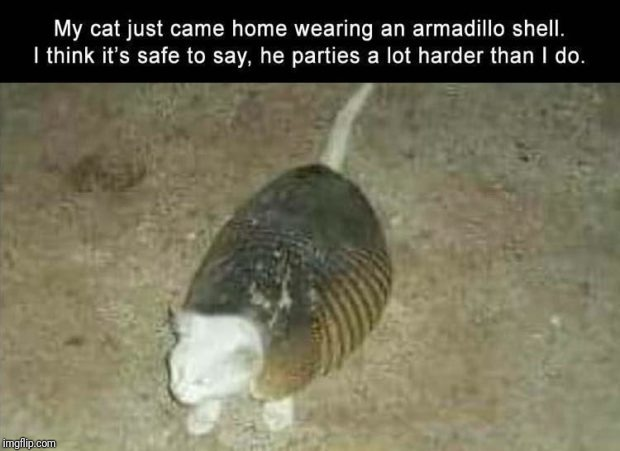 image tagged in memes,funny,cat,party,shell,cats | made w/ Imgflip meme maker