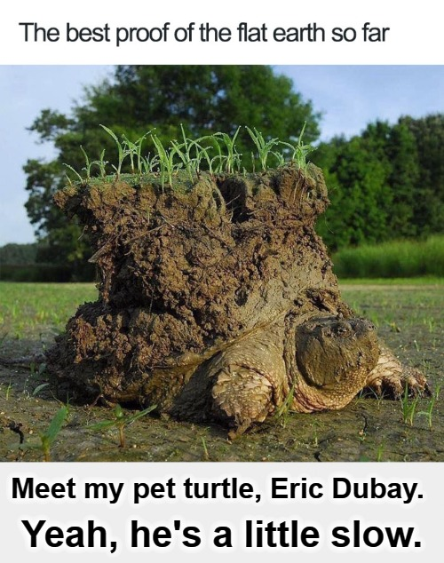The best proof of the flat earth so far. | Meet my pet turtle, Eric Dubay. Yeah, he's a little slow. | image tagged in flat earthers,flat earth,flat earth club,special kind of stupid,you can't fix stupid,test your stupidity | made w/ Imgflip meme maker