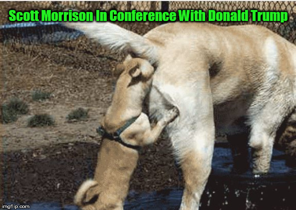 Scott Morrison In Conference With Donald Trump | Scott Morrison In Conference With Donald Trump | image tagged in scott morrison,morrison | made w/ Imgflip meme maker