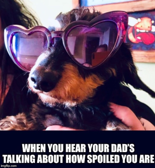 Spoiled Puppy | image tagged in spoiled,dog,gay,dad | made w/ Imgflip meme maker