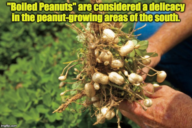 """Boiled Peanuts"" are considered a delicacy in the peanut-growing areas of the south. 