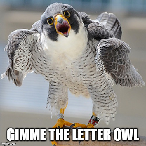 GIMME THE LETTER OWL | made w/ Imgflip meme maker