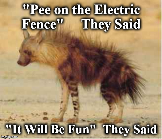 "hyena | ""Pee on the Electric Fence""     They Said ""It Will Be Fun""  They Said 
