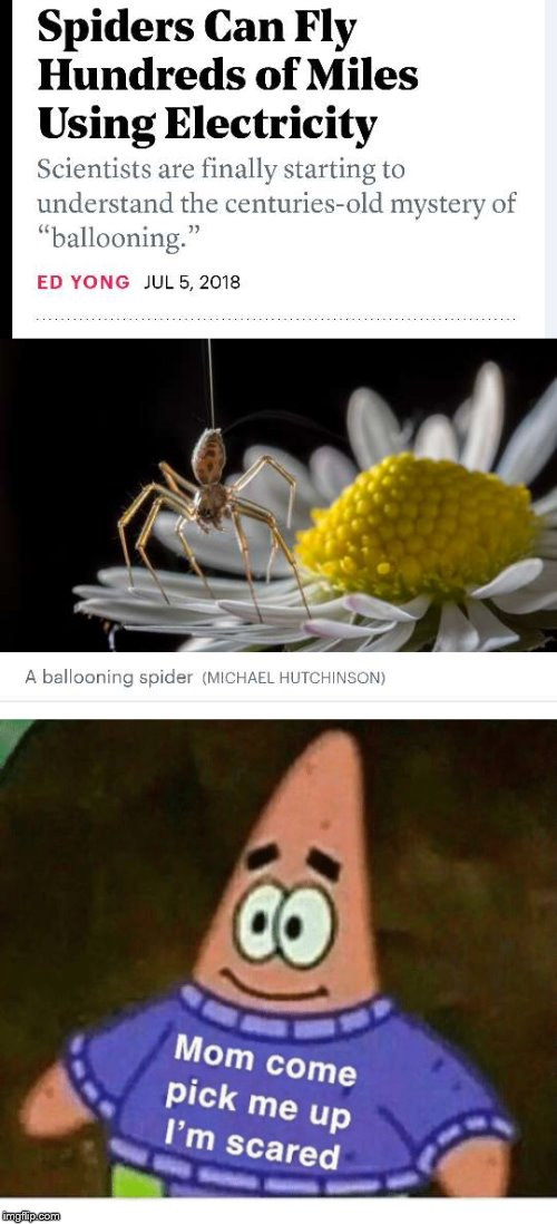 spiders can fly | image tagged in mom pick me up i'm scared,memes,funny,spider,fly,cool | made w/ Imgflip meme maker