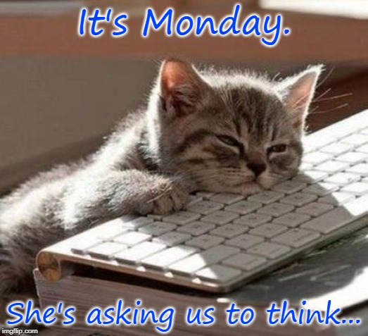 tired cat | It's Monday. She's asking us to think... | image tagged in tired cat | made w/ Imgflip meme maker