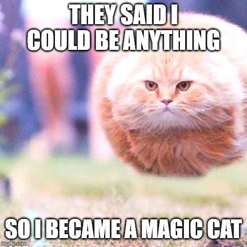 THEY SAID I COULD BE ANYTHING; SO I BECAME A MAGIC CAT | image tagged in cat,magic,funny,awsome | made w/ Imgflip meme maker