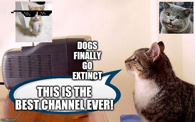 BEST..... CHANNEL..... EVER |  DOGS FINALLY GO EXTINCT; THIS IS THE BEST CHANNEL EVER! | image tagged in cat watching tv,funny,memes | made w/ Imgflip meme maker