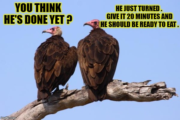 Vultures | YOU THINK HE'S DONE YET ? HE JUST TURNED .  GIVE IT 20 MINUTES AND HE SHOULD BE READY TO EAT . | image tagged in vultures | made w/ Imgflip meme maker
