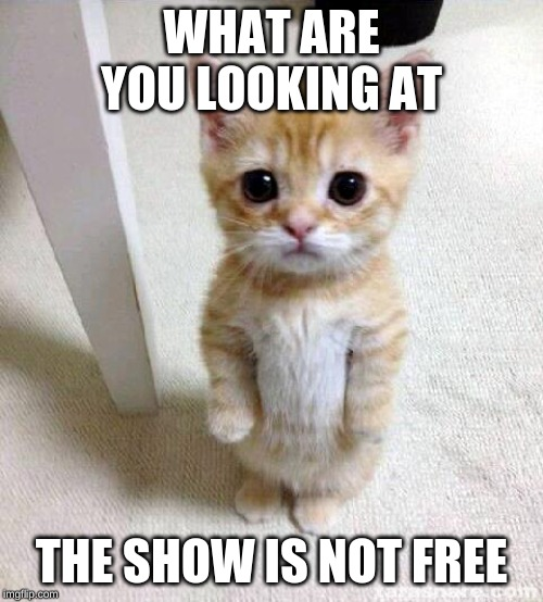 Cute Cat |  WHAT ARE YOU LOOKING AT; THE SHOW IS NOT FREE | image tagged in memes,cute cat | made w/ Imgflip meme maker