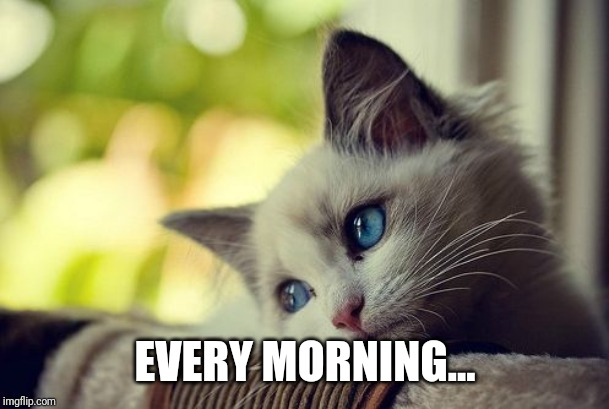 First World Problems Cat Meme | EVERY MORNING... | image tagged in memes,first world problems cat | made w/ Imgflip meme maker